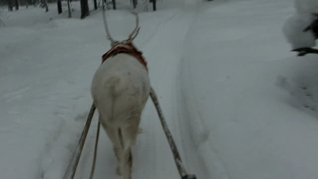 reindeer - sledge stock videos & royalty-free footage