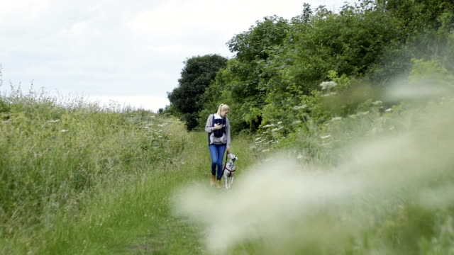 relaxed parenting walking through the field with dog - dalmatian dog stock videos and b-roll footage