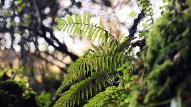 relaxing image of a healthy fern plant in nature - fern stock videos & royalty-free footage
