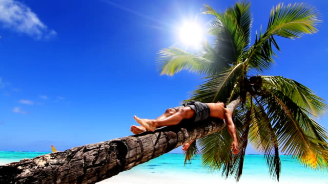 Relaxing in a palm tree