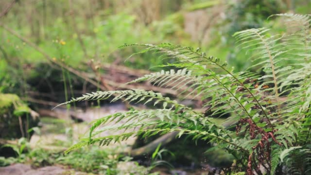 relaxing scene of  a beautiful fern and a streaming river in nature - parque natural stock videos and b-roll footage