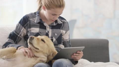 vídeos y material grabado en eventos de stock de relájese con el perro - mascota