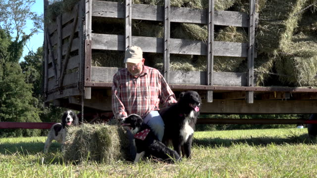 relaxing with the dogs after a long day of baling hay - border collie stock videos & royalty-free footage