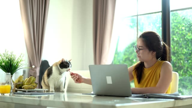 relaxing work from home woman on a floor working assisted by her cat - working in remote location stock videos & royalty-free footage