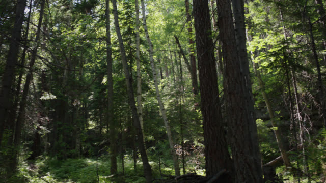 relict forest in siberia. taiga. - named wilderness area stock videos & royalty-free footage