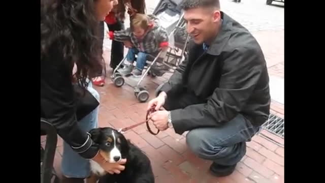 remember when you got home from work one day, and a puppy was waiting for you at the door? yeah, we neither, but we sure as heck believe that we... - sergeant stock videos & royalty-free footage