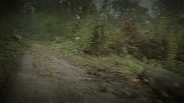 remnants of hurricane ophelia heads towards the uk and ireland; via as211087027 / kent: near sevenoaks: int car fallen trees along roadside track - personal land vehicle stock videos & royalty-free footage