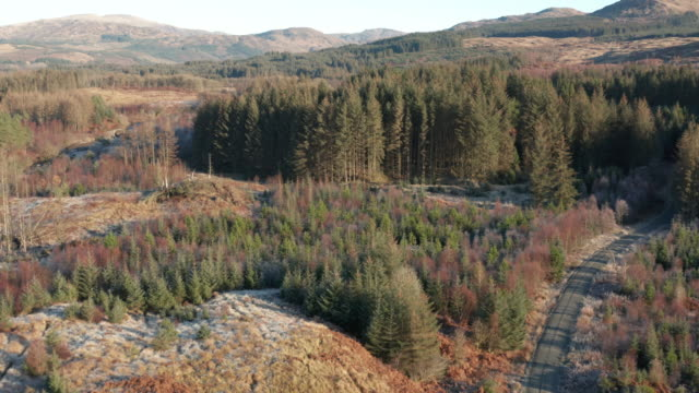 remote area of rural dumfries and galloway with pine forest and frost on the ground - johnfscott stock videos & royalty-free footage