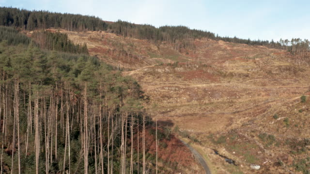 remote area of rural dumfries and galloway with pine forest growing on the side of a hill - johnfscott stock videos & royalty-free footage