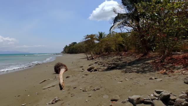 AERIAL Remote beach in Costa Rica