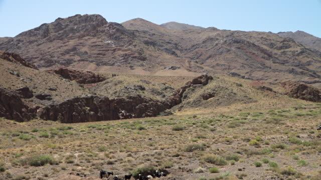 Remote goat farming near Tabriz, Iran