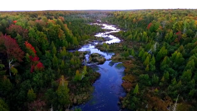 vídeos de stock, filmes e b-roll de remote lake and river  in the upper peninsula of michigan from above - rio