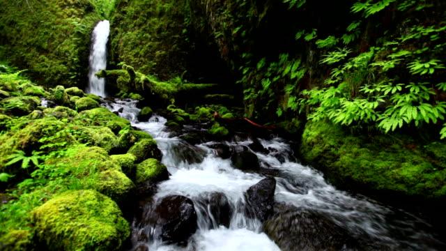 vídeos y material grabado en eventos de stock de remoto cascada en medio de una selva tropical exuberante, columbia river gorge, oregón, ee.uu. - cascadas de multnomah