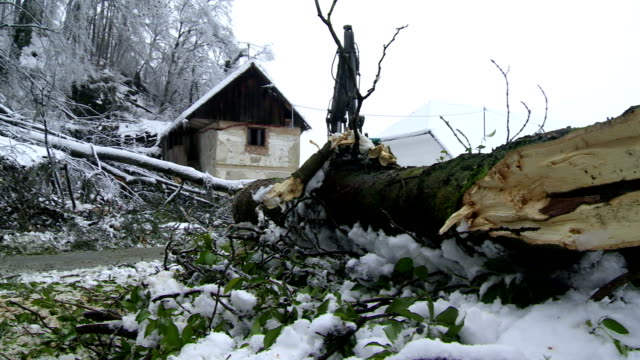 removing broken trees left by sleet - branch plant part stock videos and b-roll footage
