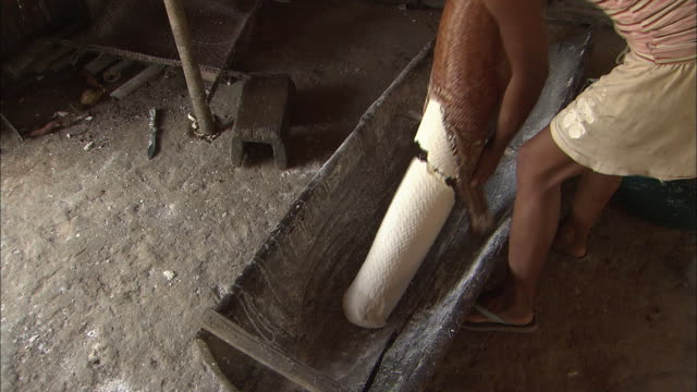 Removing Cassava (Yucca) From The Tubes In The Village Of Santa Marta, Colombia