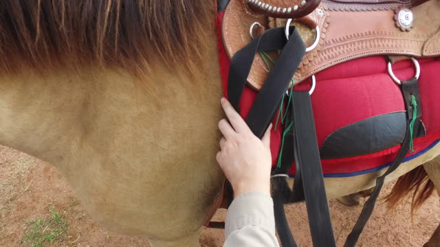 POV Removing saddle from horse