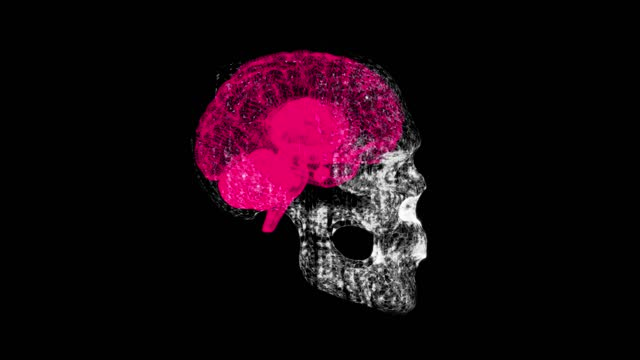 3d gerenderte illustration des menschlichen roten gehirns röntgen-scan - cerebellum stock-videos und b-roll-filmmaterial