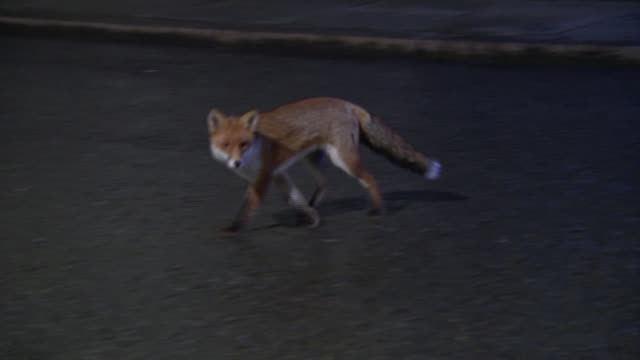vídeos y material grabado en eventos de stock de conservative mps pressing to be allowed to vote to leave the eu england london downing street shots of fox crossing the road in downing street front... - liam fox político