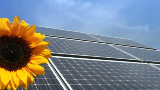 renewable energy - solar panel and a sunflower - elektrizität stock videos & royalty-free footage