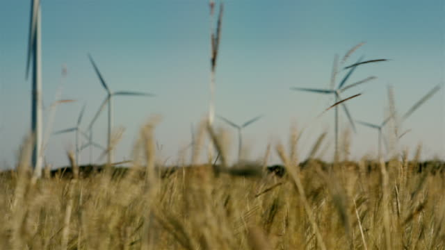 renewable innovative energy wind farm in the rural ranches of latin america. juxtaposing technology and nature working together - collection - environmentalist stock videos & royalty-free footage