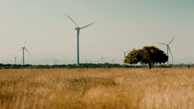 renewable innovative energy wind farm in the rural ranches of latin america. juxtaposing technology and nature working together - collection - dragon tree stock videos & royalty-free footage