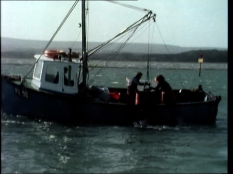 """report on britain's oyster industry; *also available as fs180377005* england: hatfield sof: """"it seems hardly.......................delicacy."""" fishing... - mollusc stock videos & royalty-free footage"""