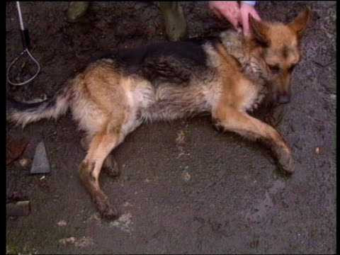 rspca report on rise in animal cruelty england manchester ts rspca officer leaning over wall into back yard as alsation barking and jumping up at him... - 横たわる点の映像素材/bロール