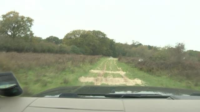 stockvideo's en b-roll-footage met wwf report warns of biodiversity loss uk west sussex knepp wildland various shots of animas and nature including egrets birds deer cows and pigs... - koet