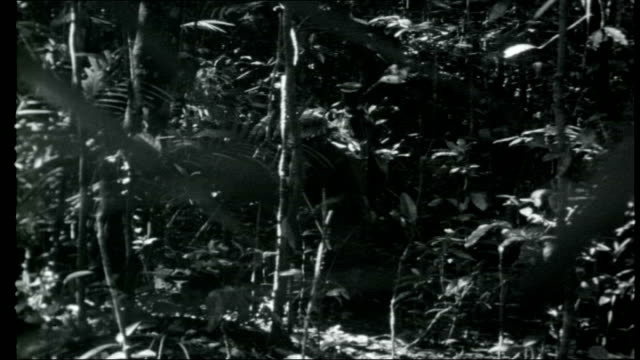 malaysia gurkhas fight in borneo gurkha knife being used to cut branch of tree gurkhas gathering branches gurkha soldier sending morse code message... - knife weapon stock videos & royalty-free footage