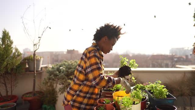 repotting my plants - gardening stock videos & royalty-free footage