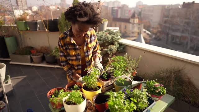 repotting meine pflanzen - idyllic stock-videos und b-roll-filmmaterial