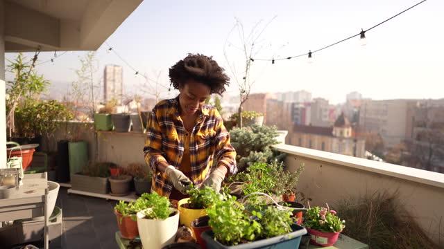 repotting my plants - loft apartment stock videos & royalty-free footage