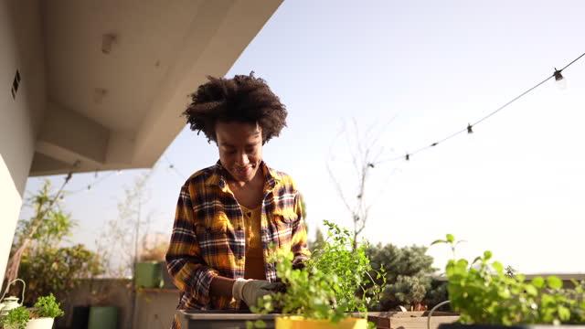 vidéos et rushes de rempoter mes plantes - jardiner