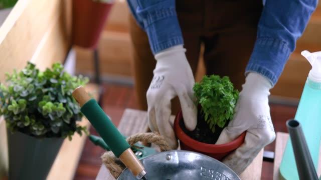 umtopfen - topfpflanze stock-videos und b-roll-filmmaterial