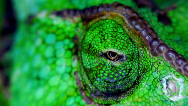 reptile - animal eye stock videos & royalty-free footage