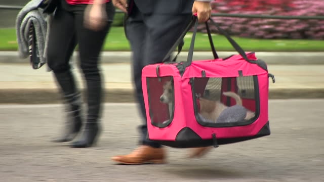 a rescue dog being delivered to 10 downing street - cute stock videos & royalty-free footage