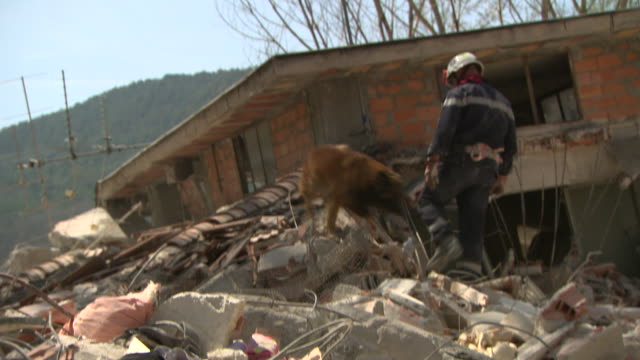 rescue dog helps the firemen - rubble stock videos & royalty-free footage