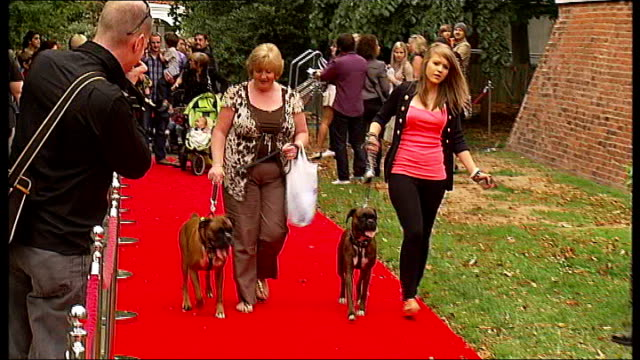 stockvideo's en b-roll-footage met rescue dogs attend film premiere of 'cats & dogs 2' in london; ext limo along int car max and nellie inside limo ext max and nellie getting out of... - red