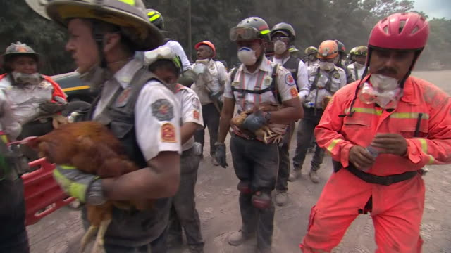 rescue teams holding abandoned chickens in el rodeo guatemala after the fuego volcano eruption - guatemala stock videos & royalty-free footage