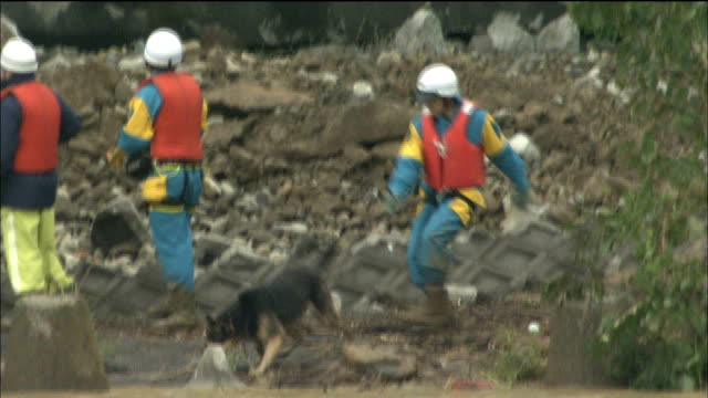 rescue workers use dogs to hunt for victims of the chuetsu earthquake. - rescue stock videos & royalty-free footage