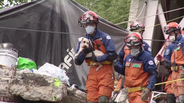 vídeos y material grabado en eventos de stock de rescuers pulled a dog from the rubble of an earthquaketoppled building in mexico city's tlalpan neighborhood the last survivor found alive before... - 2017
