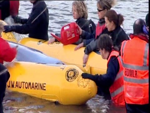 rescuers splash disorientated bottlenose whale as it lies in inflatable harness in river thames 25 jan 06 - cetaceo video stock e b–roll