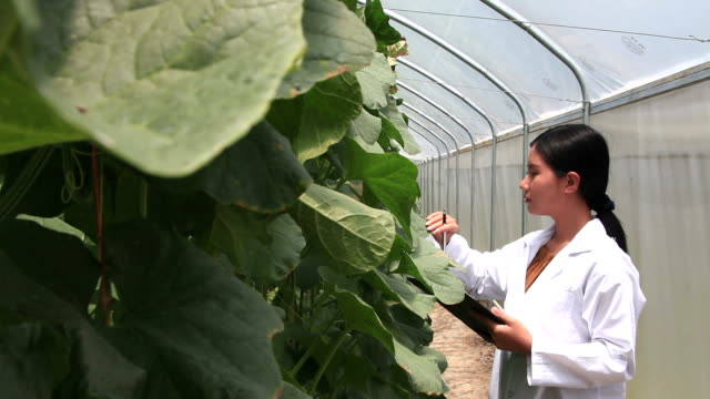 Research and development to research melon in greenhouse farm