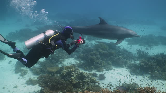 research diver and dolphin swimming in the red sea - red sea stock videos & royalty-free footage
