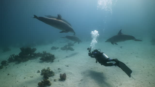 research diver and four dolphins in red sea - red sea stock videos & royalty-free footage