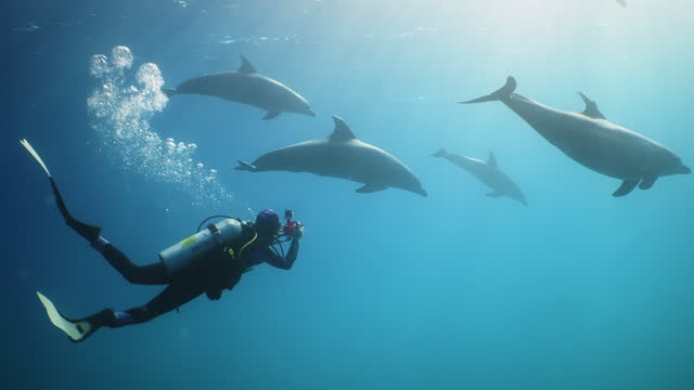 research diver filming dolphins near surface in red sea - red sea stock videos & royalty-free footage