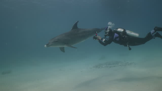 research diver films dolphin - red sea stock videos & royalty-free footage
