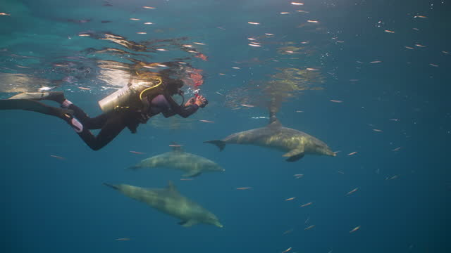 research diver with three dolphins at surface in red sea - red sea stock videos & royalty-free footage