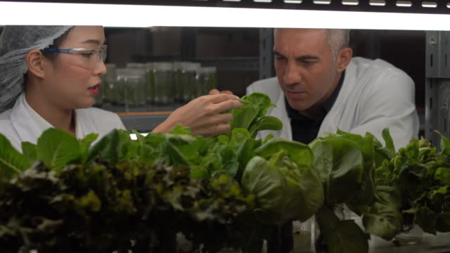stockvideo's en b-roll-footage met researcher confirming vegetable growth in greenhouse - overige