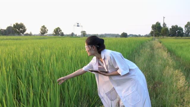 ジャスミン ライス フィールドの研究者 - 農業点の映像素材/bロール